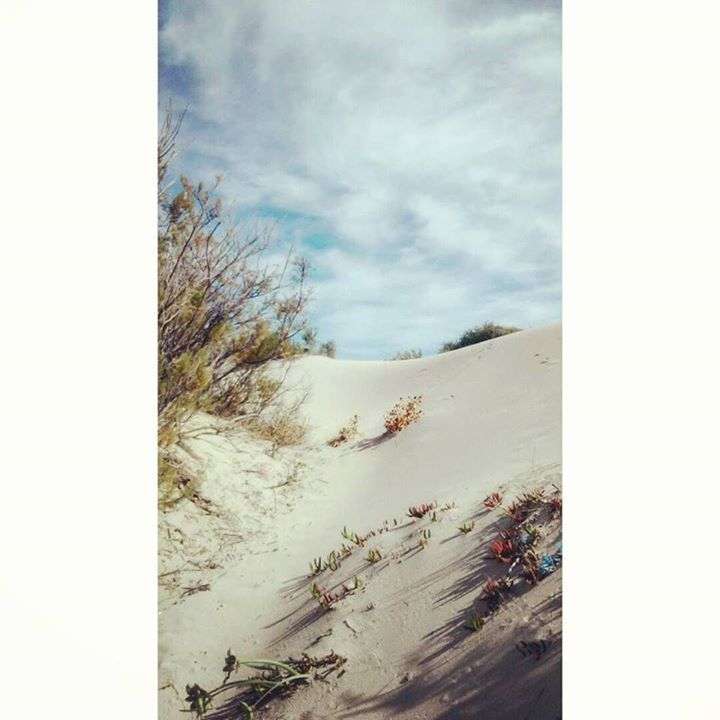 by http://ift.tt/1OJSkeg - Sardegna turismo by italylandscape.com #traveloffers #holiday | Sardegna #instagram #instapic #sardegna #instasardegna #landscape #lanuovasardegna #instamood #sunny #beautifulplace #sardinia #sand #nature #sky #myworld #peace #social #dream #taniamurafotografia Foto presente anche su http://ift.tt/1tOf9XD | January 30 2016 at 04:03PM (ph taniafotografia ) | #traveloffers #holiday | INSERISCI ANCHE TU offerte di turismo in Sardegna http://ift.tt/23nmf3B -