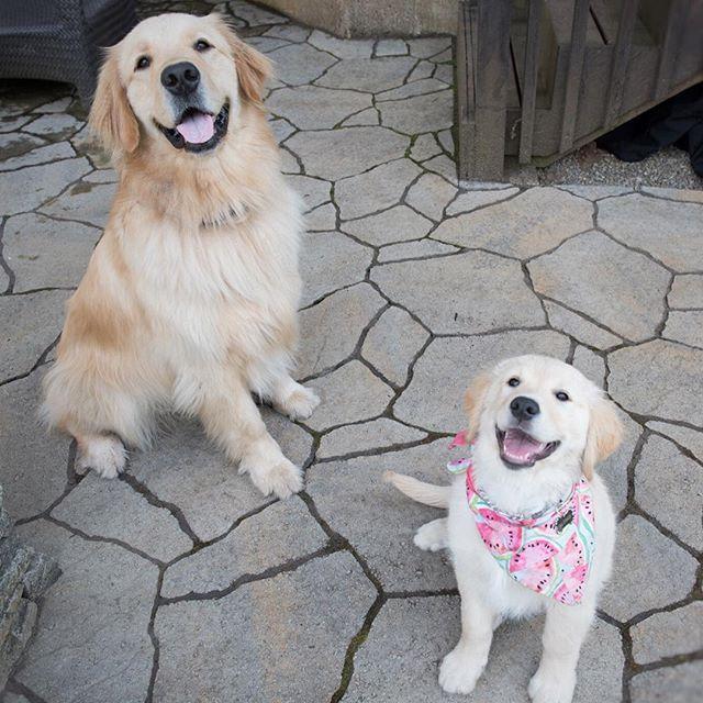Scout and Nala ❤