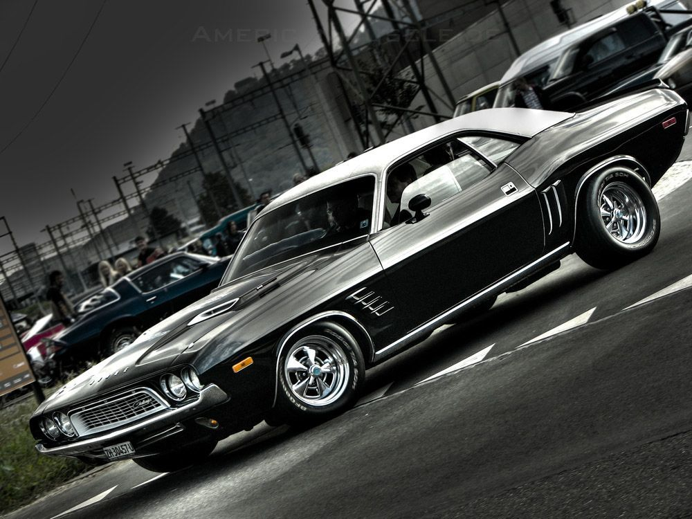 Dodge Pretty Australian Muscle Cars Classic Cars Car Wallpapers