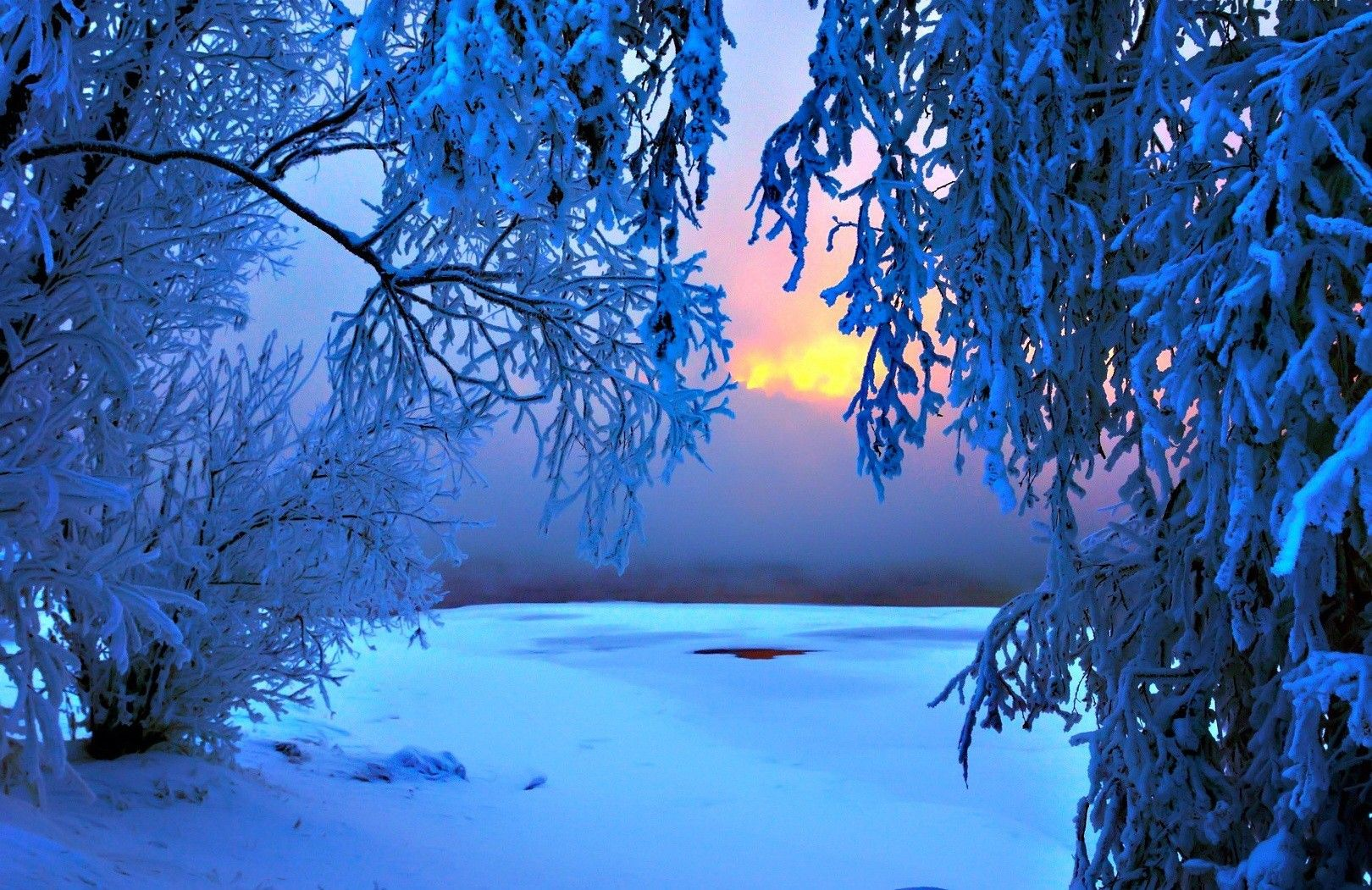 Winter-frost-sundow-glow-amazing-forest-branches-sunrise