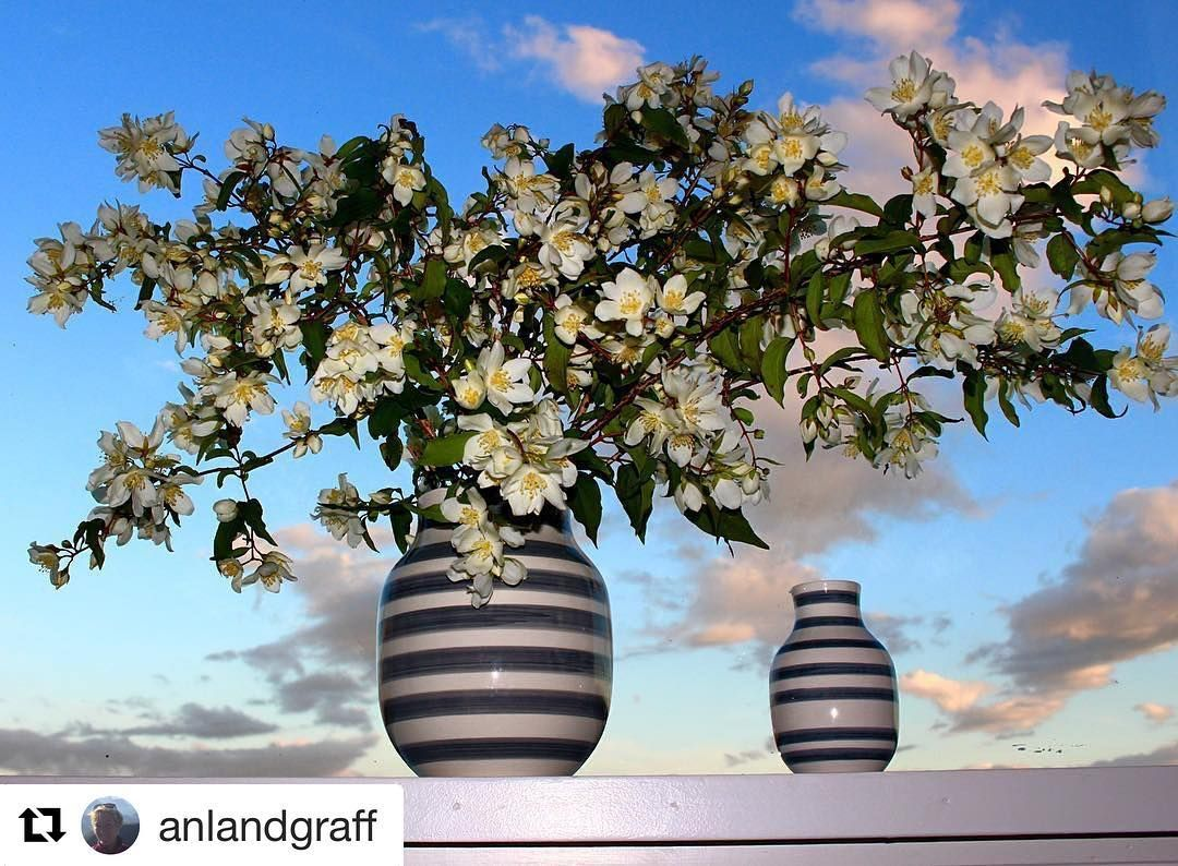Sun blue skies and flowers. It is still summer  #reiseliv #reisetips #reiseblogger #reiseråd  #Repost @anlandgraff (@get_repost)  #landscapesofnorway #smpno