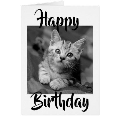 Greetings Cards Kitten Birthday Card Birthdays