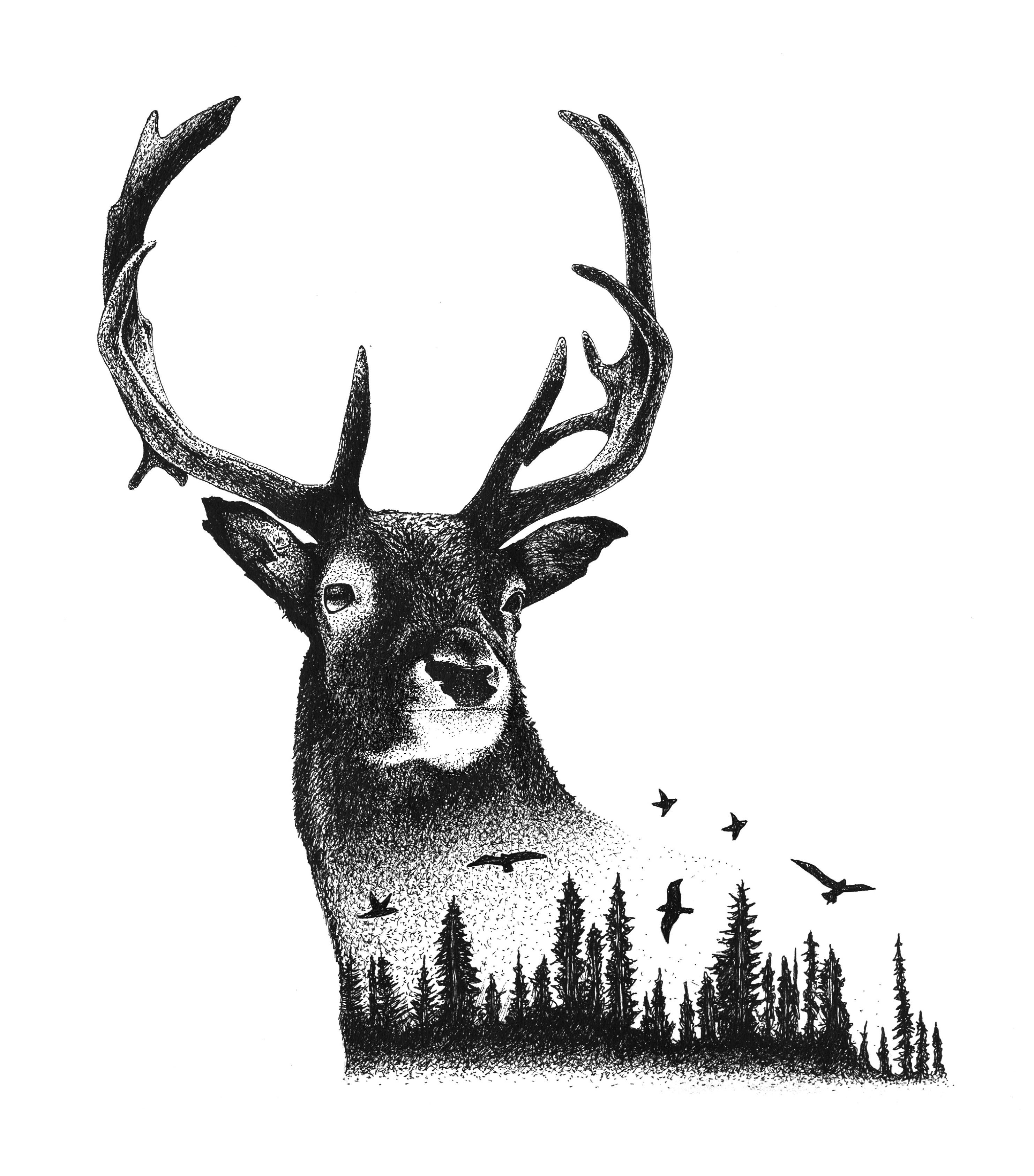 Deer Art, Illustration, Nature, Evergreen Trees