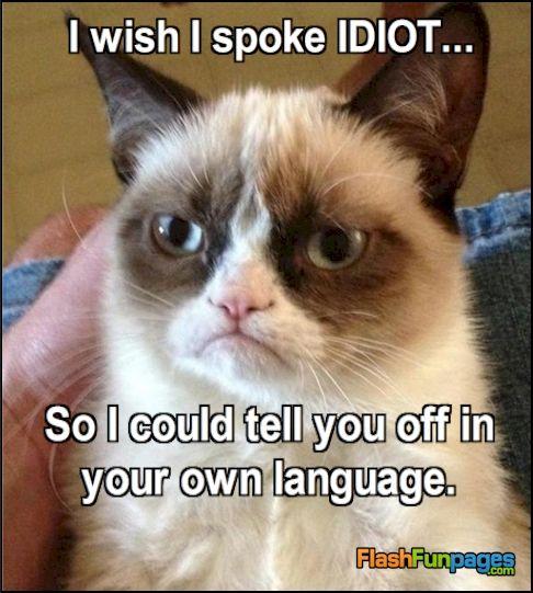 Funny Cat Ecard