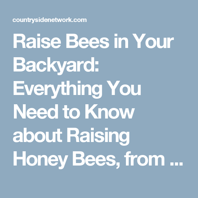 Raise Bees in Your Backyard: Everything You Need to Know ...