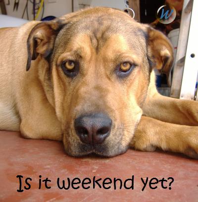 Is it weekend yet?