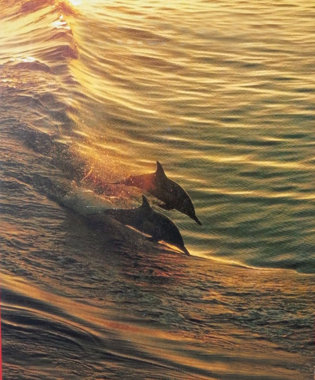 """apeninacoquinete: """"jacques cousteau, la grande barriere de"""