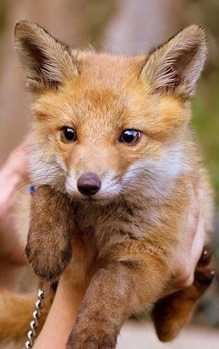 Pin By Yo Maris On Animals Pinterest Animal Foxes And Wildlife - 18 hilarious brand new animal names that are so much better than the originals