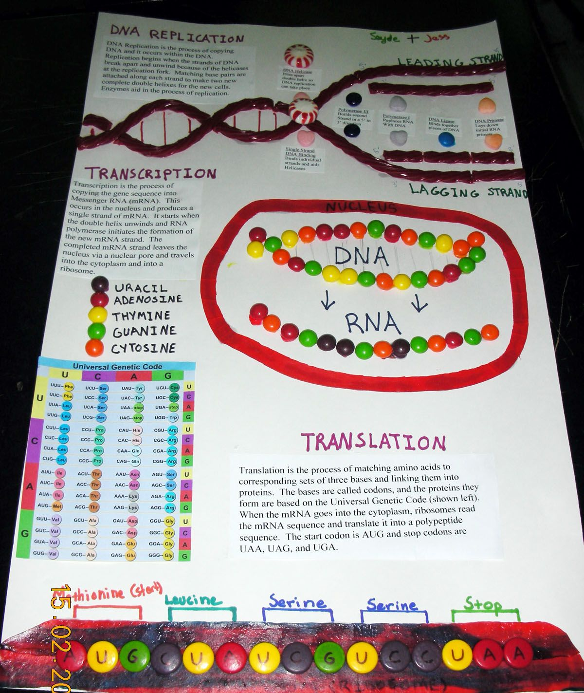 dna replication candy science biology genetics meiosis dna replication candy