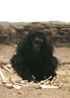 2001 Dawn Of Man Technology In The Form Of A Tapier S Jaw Bone Space Odyssey 2001 A Space Odyssey Kubrick