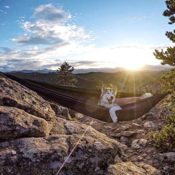 いくつになっても甘えん坊 だが大自然を前にすると威風堂々のウルフドッグ カラパイア ウルフドッグ 犬 狼犬