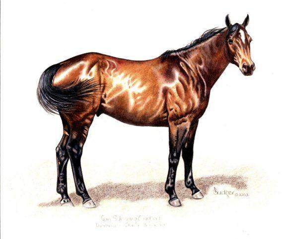 Quarter Horse Gelding Portrait Drawing B by BrucknerCowboyArt, $18.99