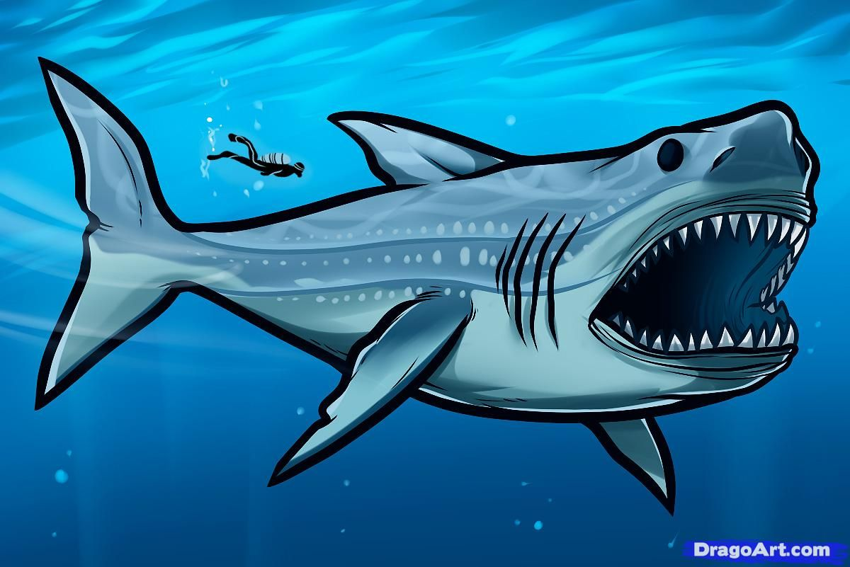 how to draw megalodon, megalodon shark | Dinosaurs | Pinterest ...