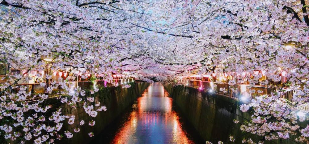 Half Day Nakameguro Daikanyama Walking Tour Tokyo Cheapo Japan Cherry Blossom Festival Tokyo Cherry Cherry Blossom Festival