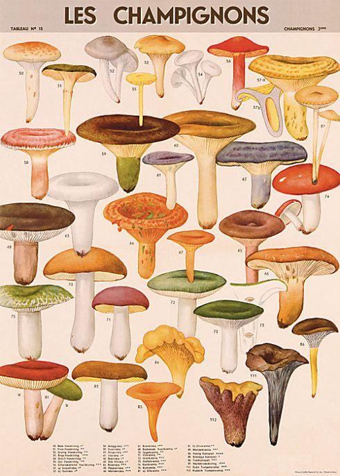 Mushroooms wrap