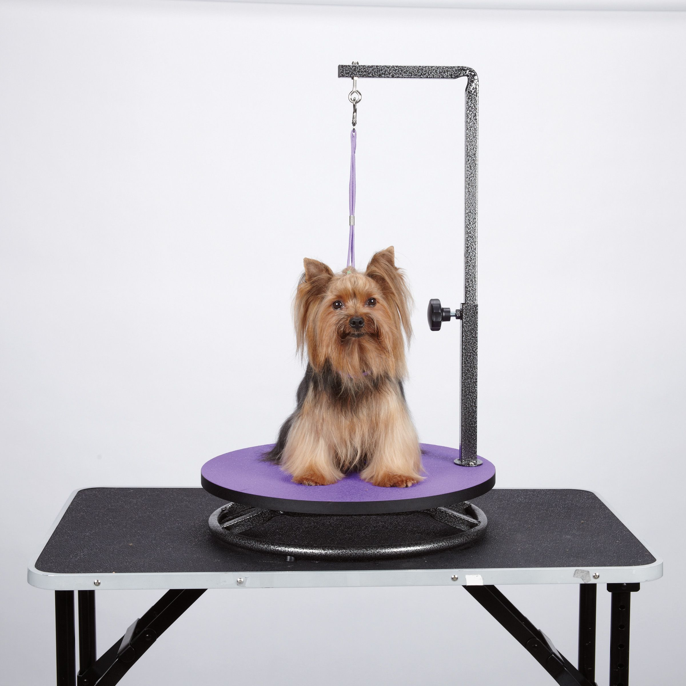 Is A Muzzle Right For Your Dog Advice For Pet Grooming Pet Grooming Small Pets Dog Grooming Supplies