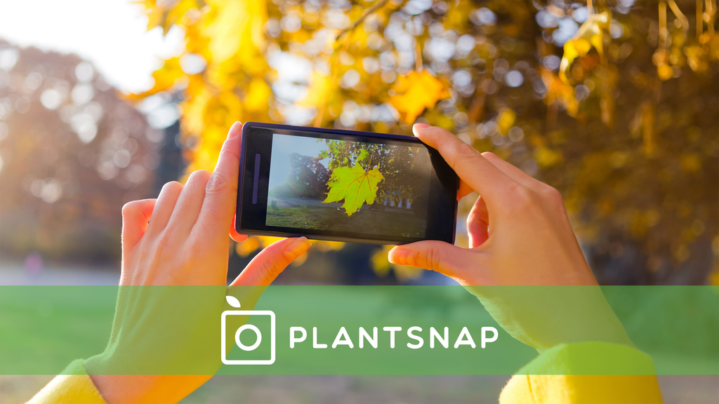 PlantSnap Identify Plants with an App project video