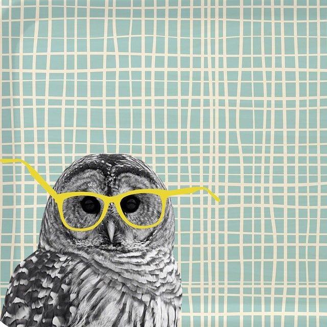 Owl by Zoé de Las Cases