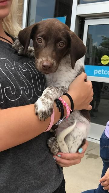 I found Baby Gene on Kitten adoption, Puppy adoption, Pets