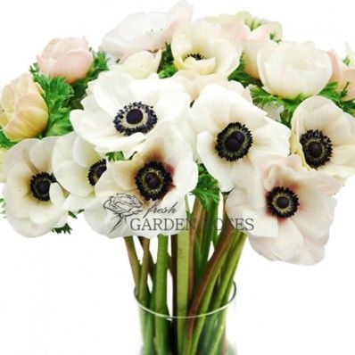 White With Blush Anemones Great Flowers For Any Occasion Anemone Flower Wholesale Flowers Wedding Anemone Wedding