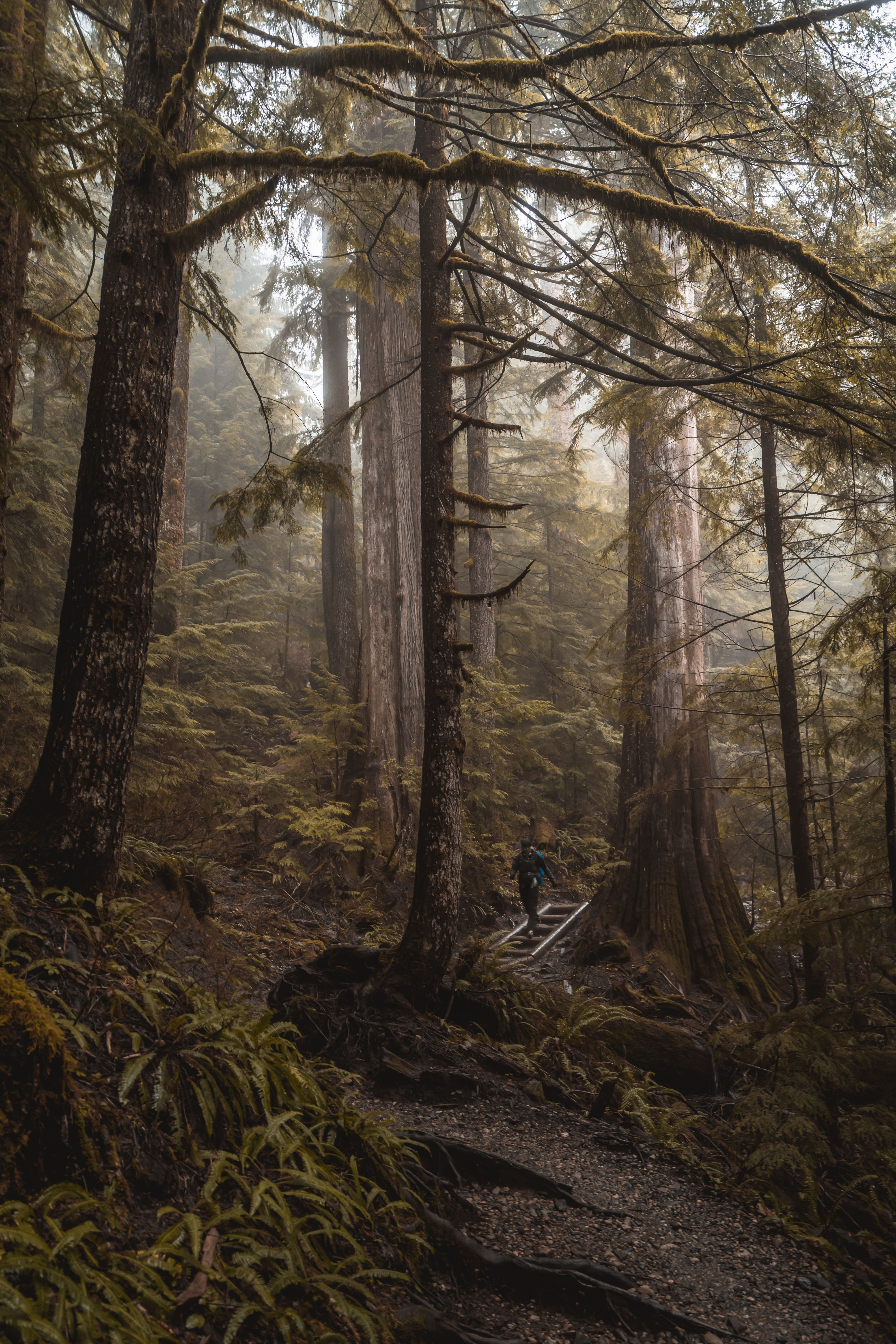 Running Through The Forest In 2020 Cinematic Photography Moody Photography Instagram Photos Creative