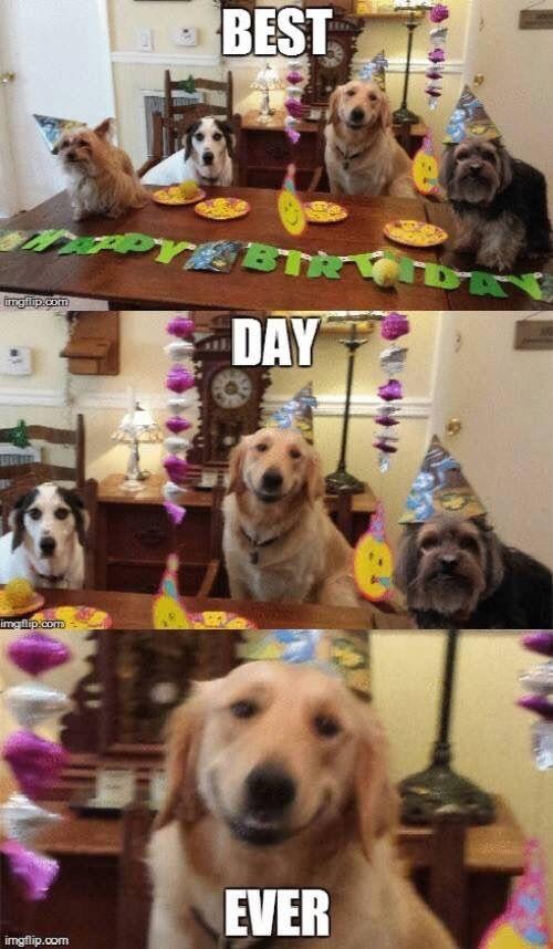Https Scontent Find1 1 Fna Fbcdn Net V T1 0 9 71178756 2395247450728212 3468795551674269696 N Jpg Nc Cat 11 Funny Dog Memes Funny Animal Memes Funny Animals