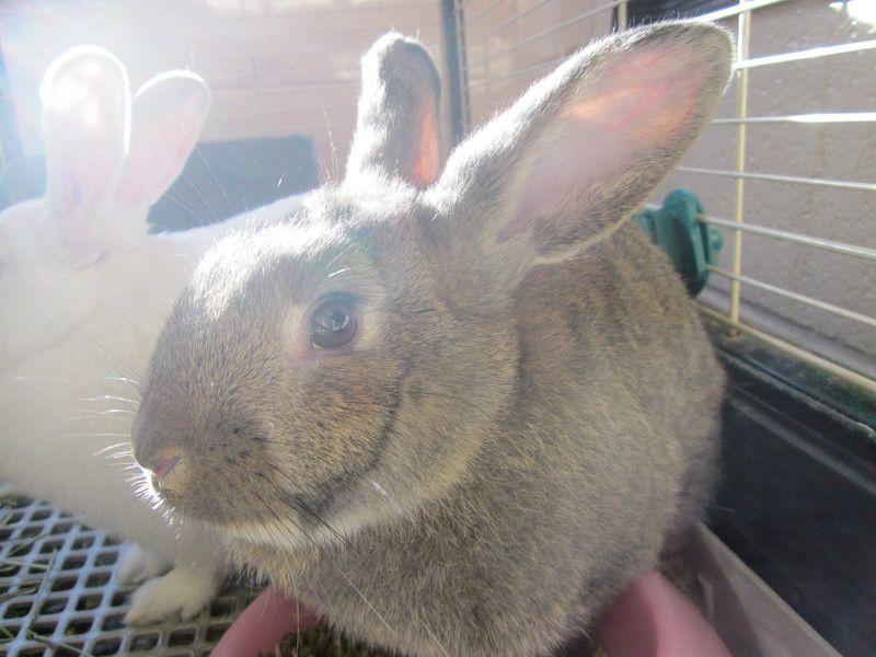 Adopt Chiquita Sar 5147 On Pet Care Adoption Pets
