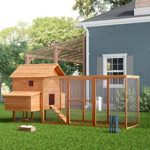 Pin By Shafeeq Mohammed Shafeeq On Aquarium In 2020 Diy Chicken Coop Plans Chickens Backyard Easy Diy Chicken Coop