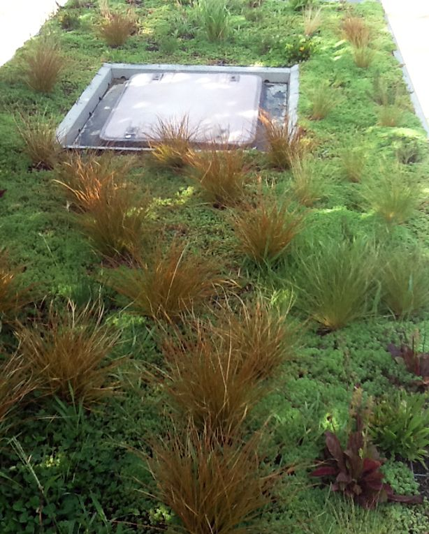 This Green Roof On The Phytokinetic Bus In Barcelona Is Made Possible With 7 Centimeter Thick Hydroponic Foam W Green Roof System Green Roof Green Roof Design