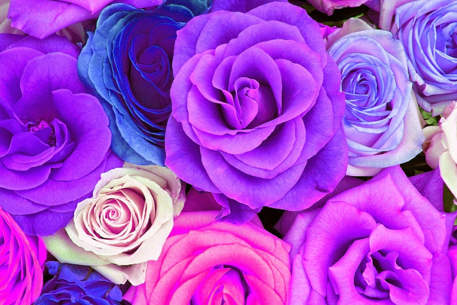 Watercolor Roses Wallpaper Freebies!