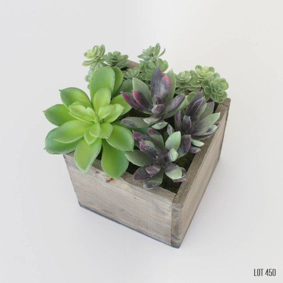 """Rustic Style Garden Sign Succulents Sign 5/"""" x 10/"""" Wood Succulent Plant Sign"""
