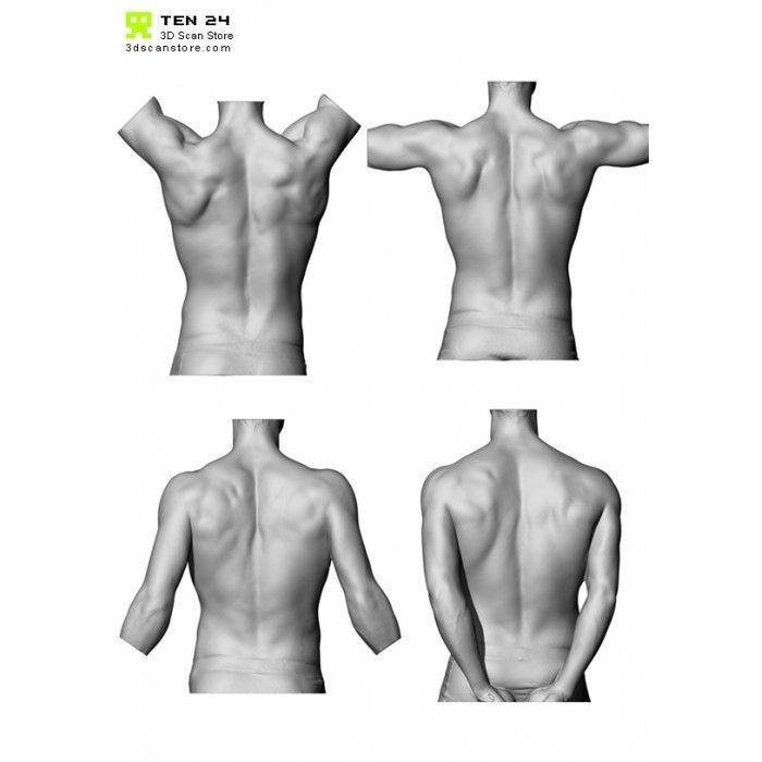 Encantador Marieb Y Hoehn Anatomía Y La Fisiología Novena Edición ...