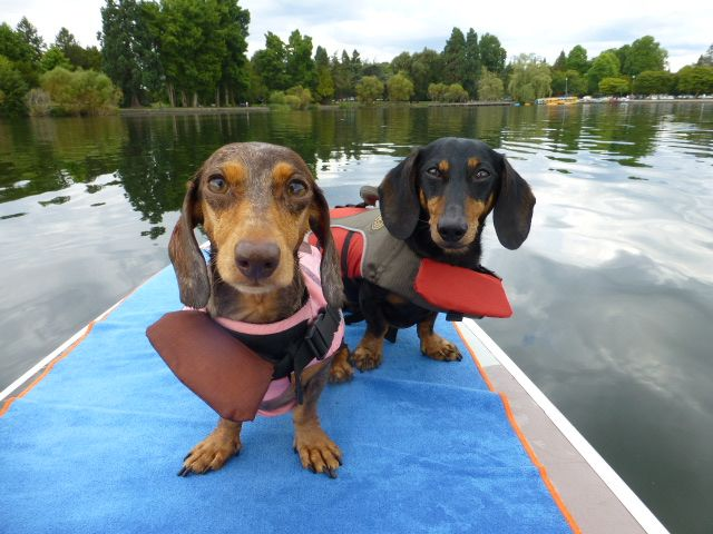 Sup Dog How To Start Paddle Boarding With Your Pup Dog Beach