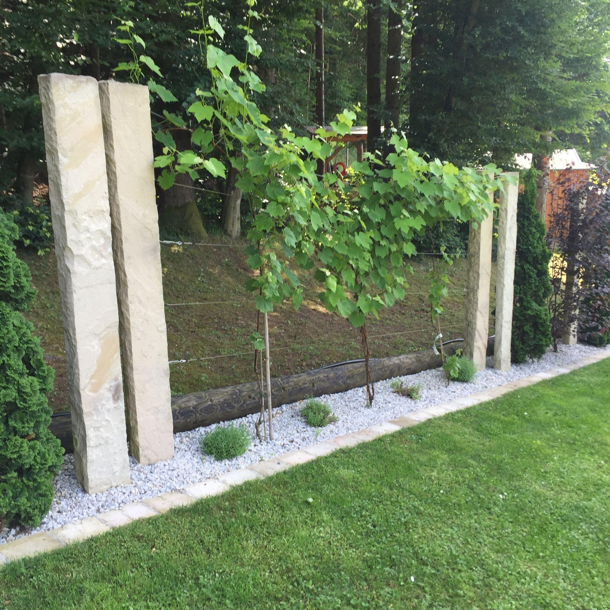 Weinreben Unsereunsere Weinreben Garten Bepflanzung