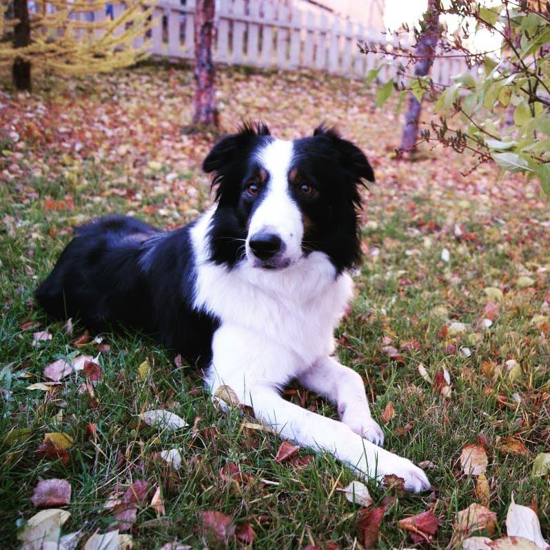 get 3D Labrador stikers Outdoor dog, Dog barking, Cat