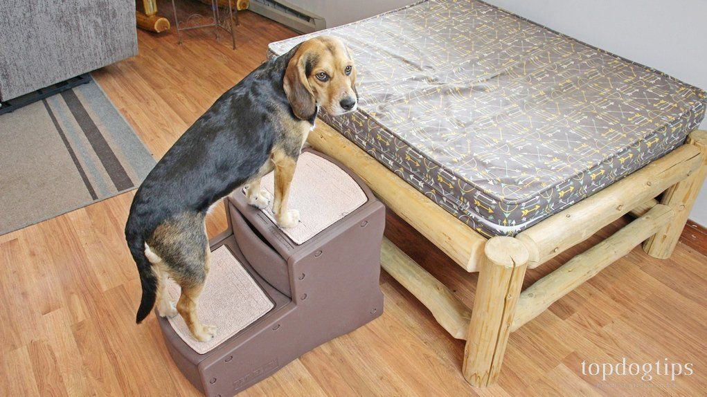Modular Pet Steps / Ramp Dog ramp, Dog stairs, Pet steps
