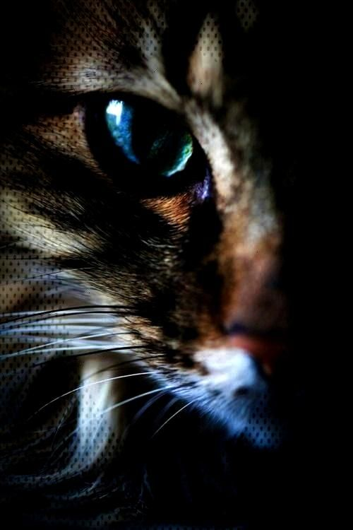 Deviantartpastel Deviantartpast Expectcats Turquoise Crotchety Instincts Painting T In 2020 Senior Cat Expectations Cat Portraits