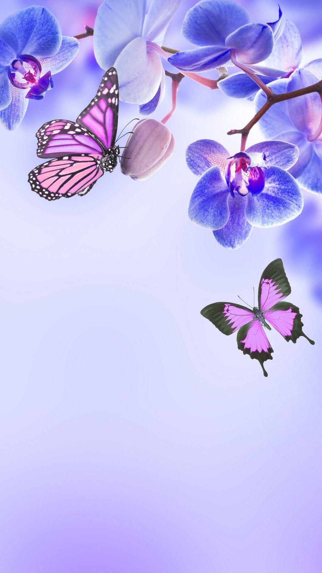 Wallpapers For Phone Orchid Wallpaper Butterfly Wallpaper Hd Flower Wallpaper