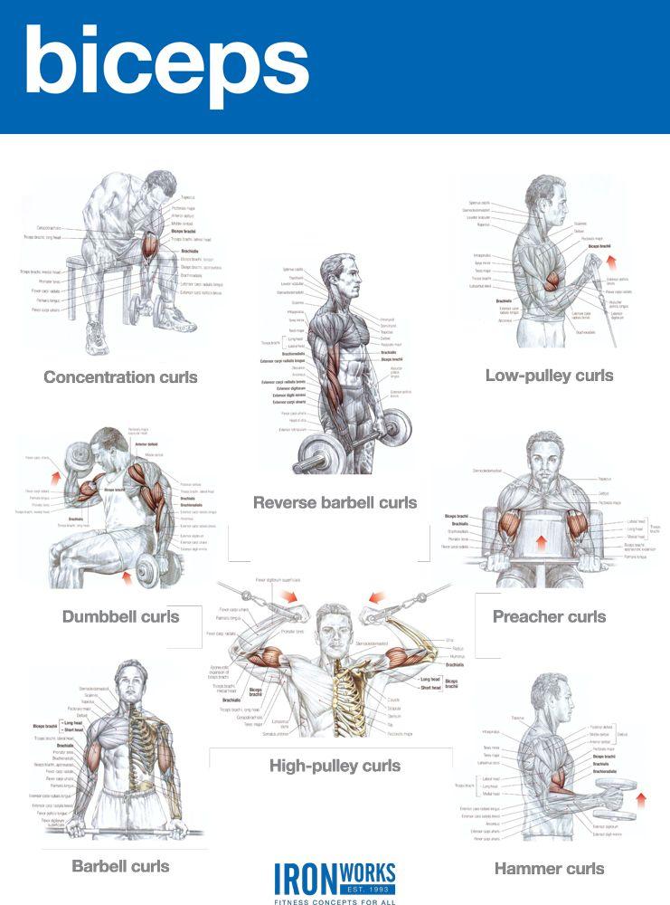 tabla ejercicios biceps gimnasio
