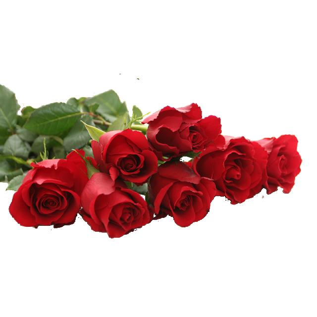 Hermosa Rosa Roja Png Rosas Rojas Hermosas Ilustracion De Rosa Boda De Rosas Rojas