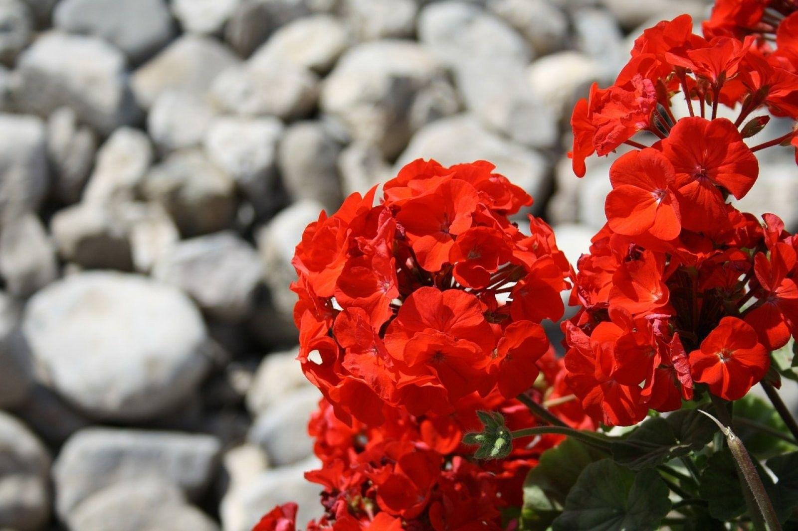 Pin On Plantas Exterior Resistentes