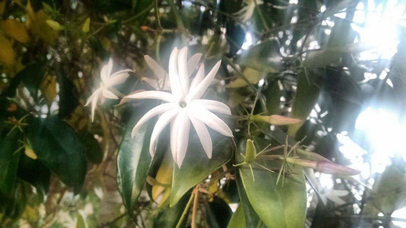 Flor de Guaco. A erva que afundeia sentimentos