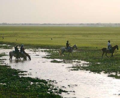Sur les pas des cow-boys dans la région des Llanos vénézueliens.