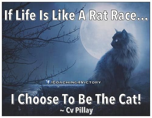 Rat Race Quotes Photos Cultural Conditioning Pinterest Quotes