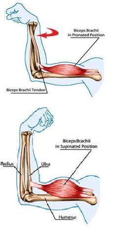 Tennis Elbow Pain On Supination