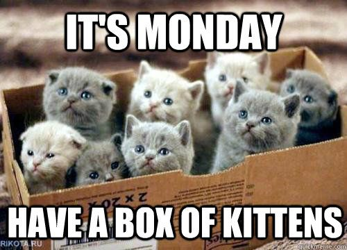 Happy Monday Meme Funny : Happy monday funny or cute it s all good