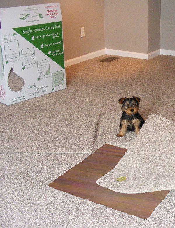 simply seamless carpet tiles   Berkshire Flooring   For the Home ...