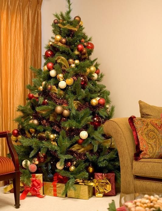 At Home Christmas Trees.Where To Place The Christmas Tree At Home For The Home