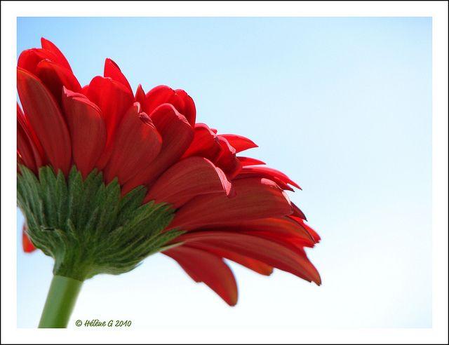 Rouge Et Bleu Red Pinterest