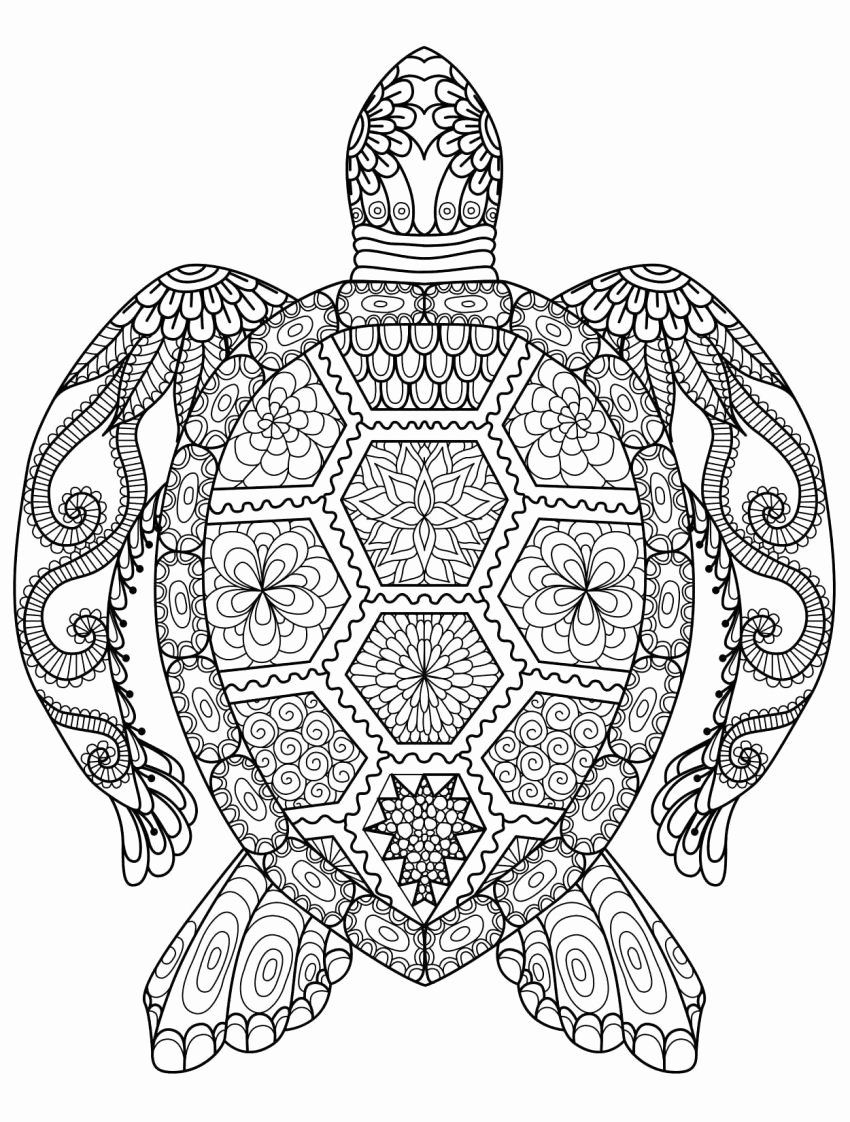 Animal Coloring Pages Hard Lovely Coloring Arts Christmas Printable Coloring Cards Free In 2020 Turtle Coloring Pages Animal Coloring Books Animal Coloring Pages